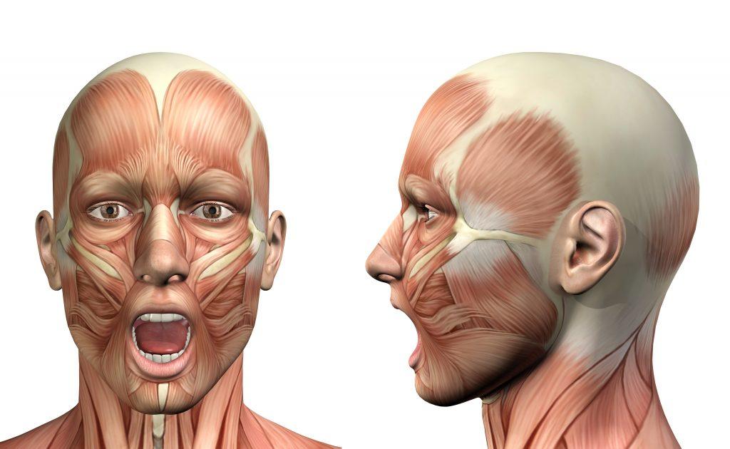 Immagine 3D di testa di uomo di fronte e poi di lato in cui sono evidenziati tutti i muscoli facciali, fra cui quelli responsabili del blocco della mandibola